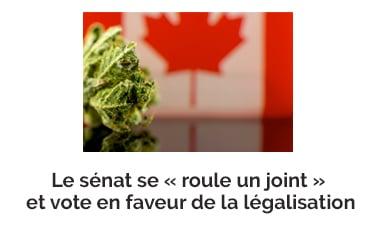 Le sénat se « roule un joint » et vote en faveur de la légalisation