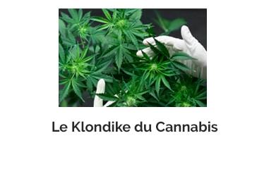 Le Klondike du Cannabis
