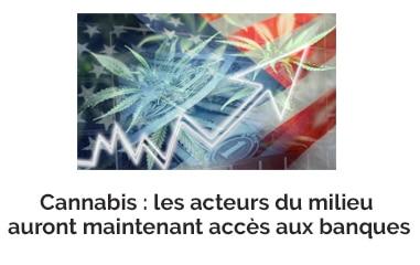 Cannabis : les acteurs du milieu du cannabis auront maintenant accès aux banques